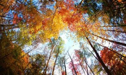 Jesienny atak alergii i astmy